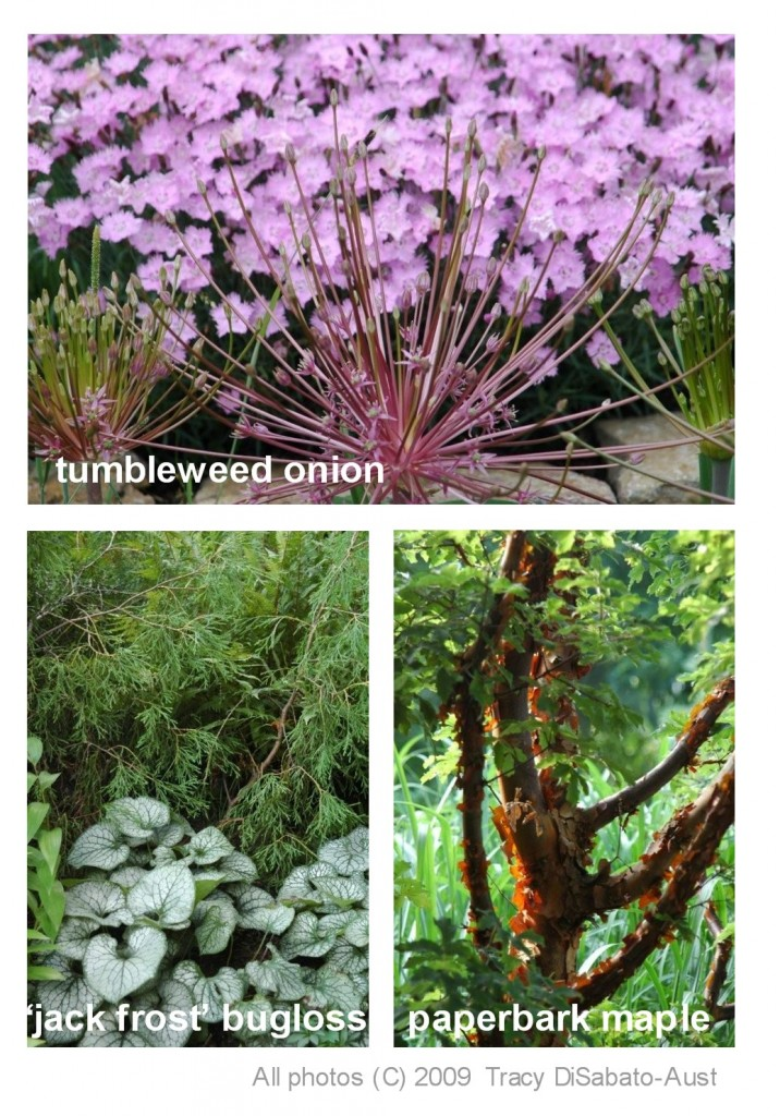 The well tended perennial garden - The well tended perennial garden ...